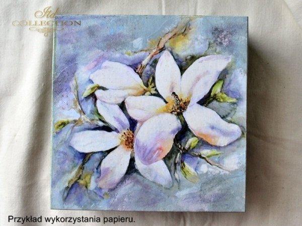 magnolia, magnolias, flower, flowers, Magdalena Rochoń - example 02