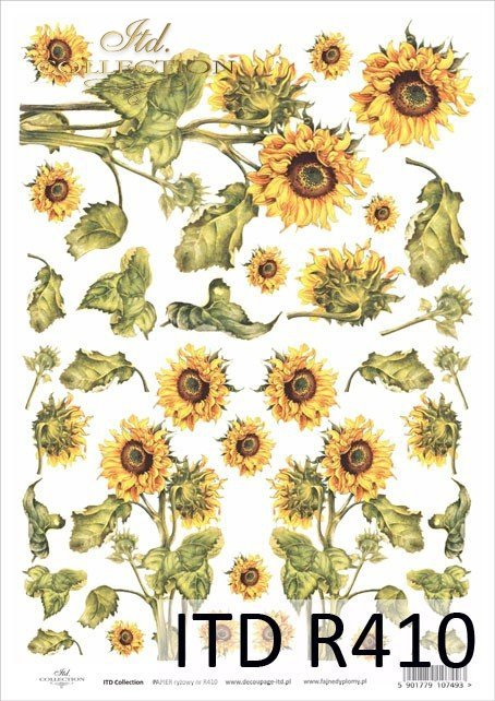 kwiat, kwiaty, kwiatek, kwiatki, listki, liście, płatki kwiatów, słonecznik, słoneczniki, słonecznika, R410
