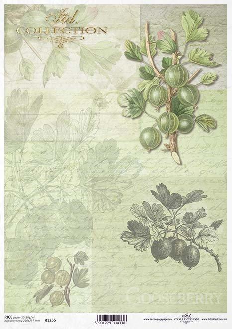 Fruta de decoupage de papel, gooseberry*Бумага декупажа фруктов, крыжовник*Papier decoupage Frucht, Stachelbeere