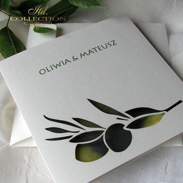 Zaproszenia ślubne / zaproszenie 01731_47_oliwki