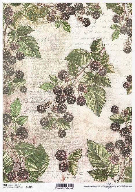 Fruta de decoupage de papel, moras silvestres*Бумага декупажа фруктов, ягоды ежевики*Papier decoupage Frucht, wilde Brombeeren