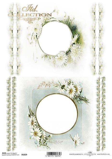 ramki, szlaczki, dekory, stokrotki, kwiaty astry, aster chiński, białe kwiaty*frames, borders, decors, daisies, asters, Chinese asters, white flowers