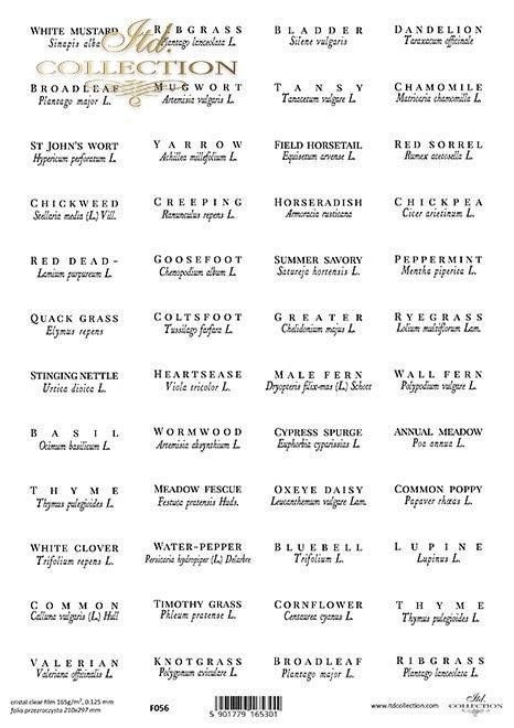 zioła po angielsku i łacińsku*herbs in english and latin*Kräuter auf englisch und lateinisch*hierbas en inglés y latín