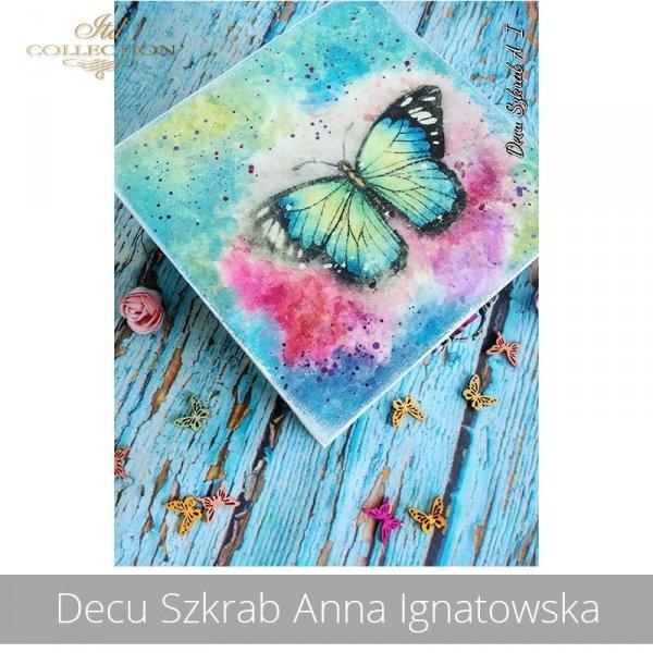 20190824-Decu Szkrab Anna Ignatowska-R1606-R0452L-example 01