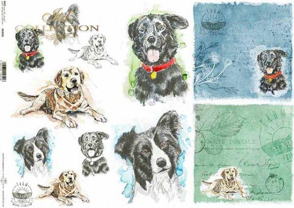 R0409L * pies, głowy psów, napisy 'happy farm'