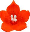 Lilijka pomarańczowa - dekoracja cukrowa 20 szt.