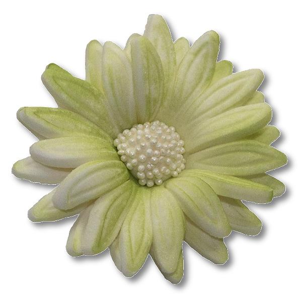 Kwiaty cukrowe MARGARETKA 10szt seledynowe