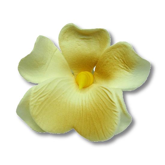 Miltonia kwiat cukrowy na tort 5cm ecru 1szt