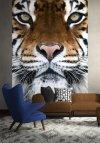 Fototapeta Tygrys - Fototapety na ścianę sklep decoart24.pl