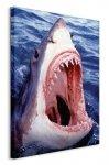 Obraz na płótnie - Rekin - Great White Shark - 90x120 cm