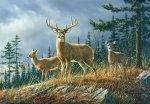Fototapeta ścienna - Jeleń - Alaska - 366x254 cm