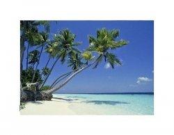 Maldives - reprodukcja