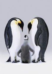Pingwiny Królewskie - plakat