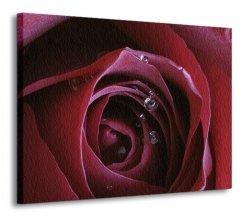 Obraz na ścianę - Pasja Roksany (Czerwona róża) - 120x90 cm