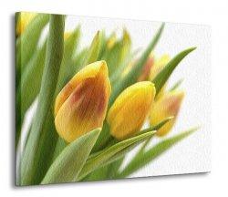 Obraz na płótnie - Żółte tulipany - 120x90 cm