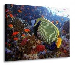 Obraz na ścianę - Emperor angelfish - Ryba - 120x90 cm
