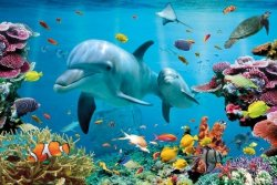 Tropikalny ocean - Delfiny - plakat