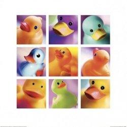 Kaczuszki, kaczki - reprodukcja
