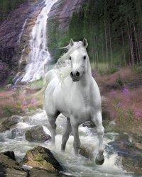 Bob Langrish Waterfall - plakat