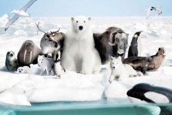 Frozen World - plakat