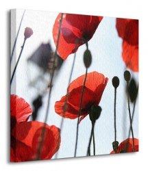 Czerwone maki - Obraz na płótnie