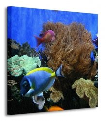 Ryby Akwariowe - Obraz na płótnie