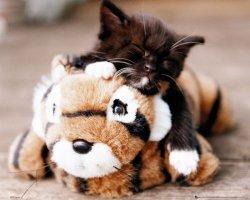 Mały Kotek i Tygrysek - plakat