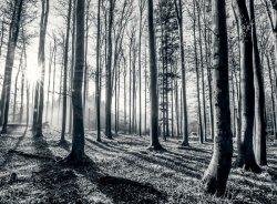 Fototapeta - Las - Promienie słoneczne - 315x232 cm - KLEJ GRATIS!