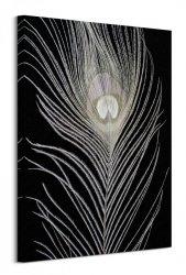 White Peacock Feather - obraz na płótnie