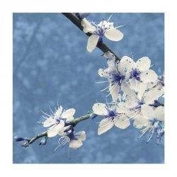 Blossom in Blue - reprodukcja