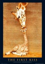 Żyrafy (Pierwszy pocałunek) - plakat