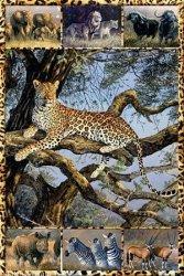 Afrykańskie zwierzęta (fotki) - plakat