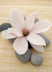 Fototapeta na ścianę - Kwiat, spa - 183x254 cm