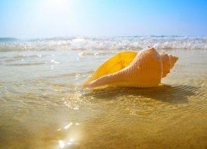 Fototapeta do kuchni - Muszla na plaży - 254x183 cm