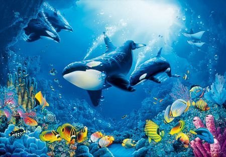 Fototapeta na ścianę - Morze koralowe (Orka) - 366x254 cm