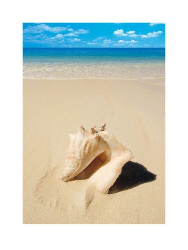 Muszla na plaży - reprodukcja
