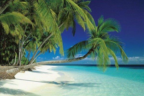 Maldives (plaża) - plakat