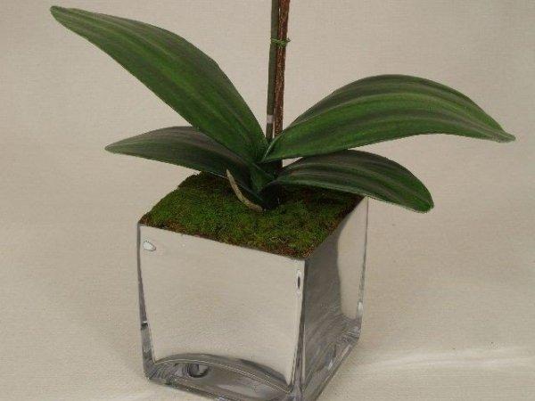 Storczyki storczyki - Orchidea - W doniczce - Jasny róż - sklep internetowy decoart24.pl